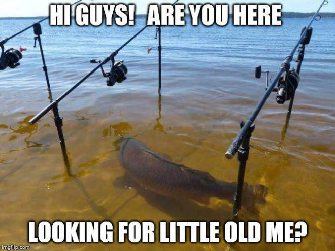 Hey guys are you here looking for little old me?  Funny Fishing Meme.